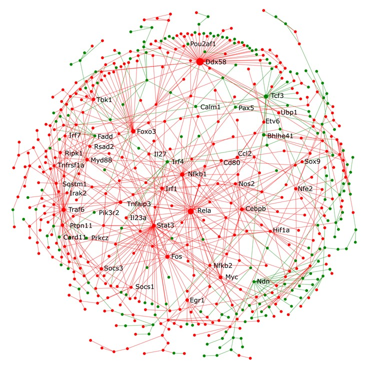 Interaction Network for host transcriptional responses in whole lungs from mice infected with Pseudomonas aeruginosa PA103 vs. control