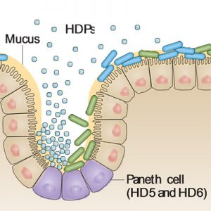 Host Defense Peptides illustration